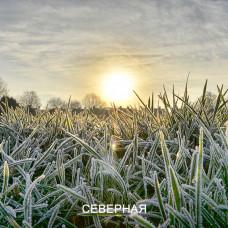 Травосмесь СЕВЕРНАЯ. Газонная трава более стойкая к заморозкам