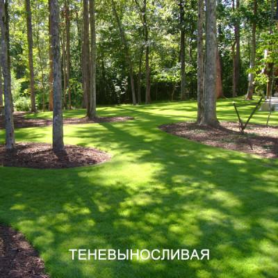 Травосмесь ТЕНЕВАЯ (ТЕНЕВЫНОСЛИВАЯ / ПАРК). Газонная трава для тенистых газонов