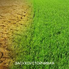 Травосмесь ЗАСУХОУСТОЙЧИВАЯ. Газонная трава для солнечных лужаек